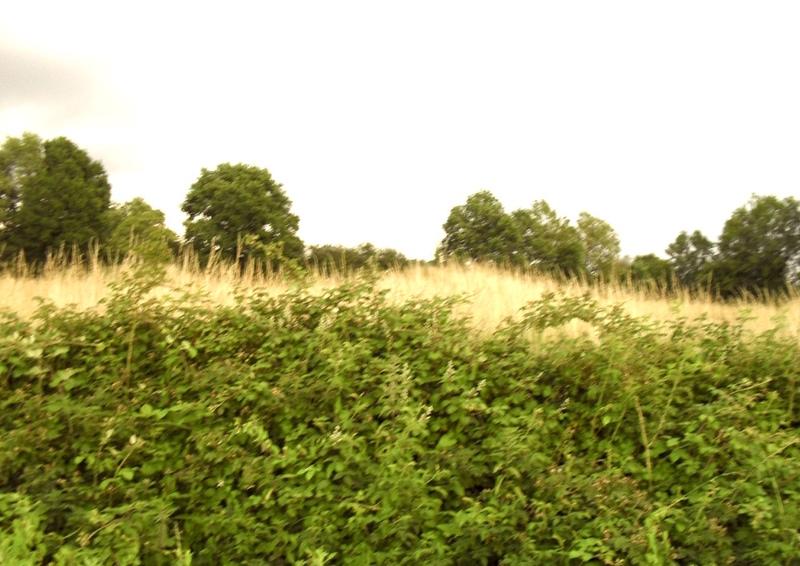 vente terrain Castillonnès Castillonnès 47330