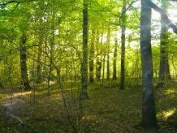 vente terrain Châteauneuf-la-Forêt Châteauneuf-la-Forêt 87130